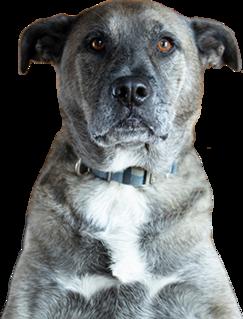 Kohlman dog