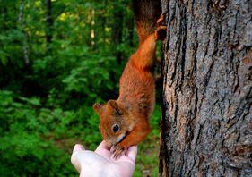 squirrel 2262733 1920