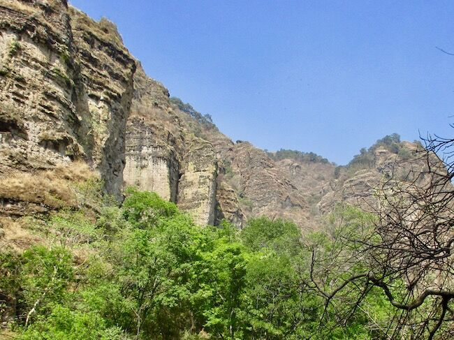 Lower part is trees with greenery. Upper part is a canyon surround with layered rock.