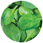 Spinach, a source of Alpha Lipoic Acid.