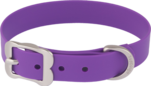 A purple dog collar.