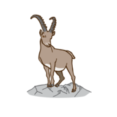 Steinwild Zeichenfläche 1