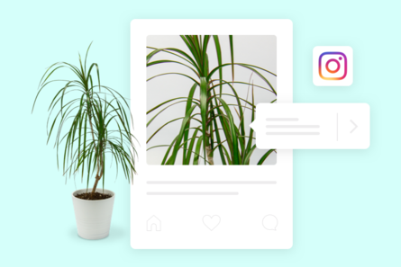 An illustration of a plant being sold inline through instagram