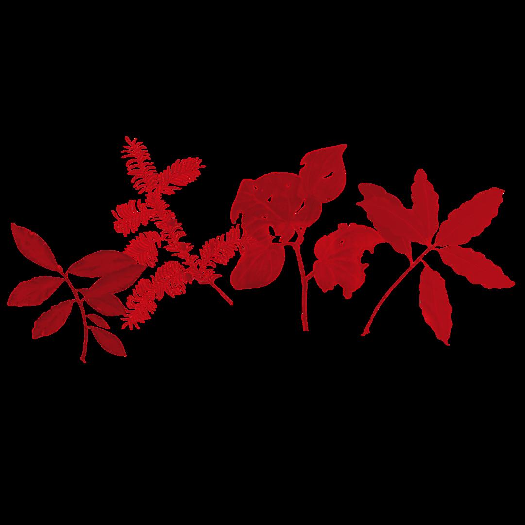 Arts Collective Website stencils NZ Native plants