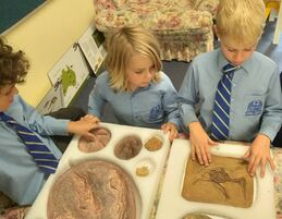 year 1 fossils4