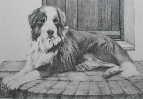 A black and white drawing commission of an Old English Sheepdog