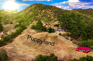Dog boarding in Santa Clarita Valley by Happy Puppy L.A. Offering pick up/drop off services to Los Angeles customers