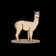 Alpaka Zeichenfläche 1