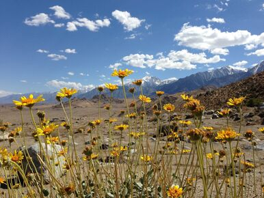 Our California Desert bike tours include trips to the Mojave Desert and Death Valley