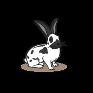 Sponsored rabbit at the Wild- & Adventure Park Ferleiten
