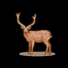 Sikawild Zeichenfläche 1