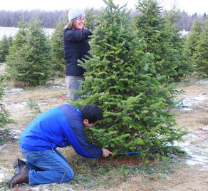A couple sawing tree at Thomas Tree Farm
