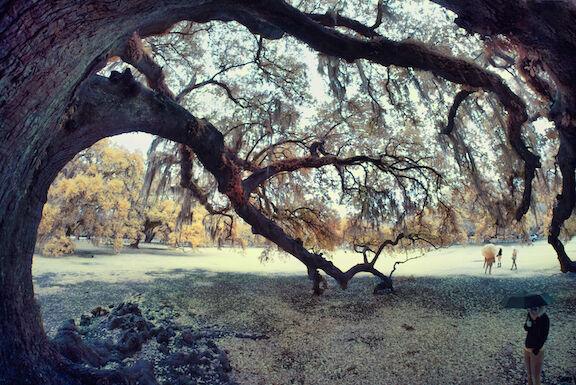 The Tree of Life in Audubon Park