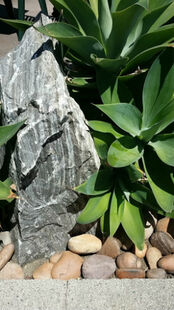 Large upright sedimentary stone next to green leaves lined with smaller rocks and edge of sidewalk below