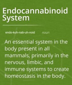 an essential system in the body present in all mammals, primarily in the nervous, limbic, and immune system to create homeostasis in the body