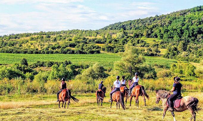 kids on horses, pony ride, horse, calarie, copii calare, calarie in armonie, dresaj natural, natural horsemanship