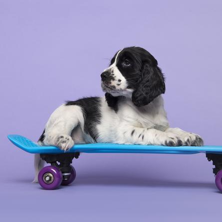 puppy exposure