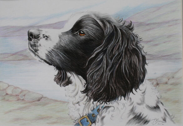 A Painting of a Springer Spaniel Water Color and inks by Jane Indigo