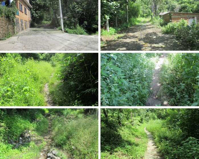 Six photos in sequence starting from the end of the paved road and going past two houses to become a dirt trail, then one lined with tall vegetation.
