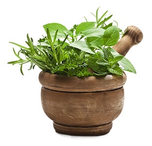 Natural herbs growing in a pot.
