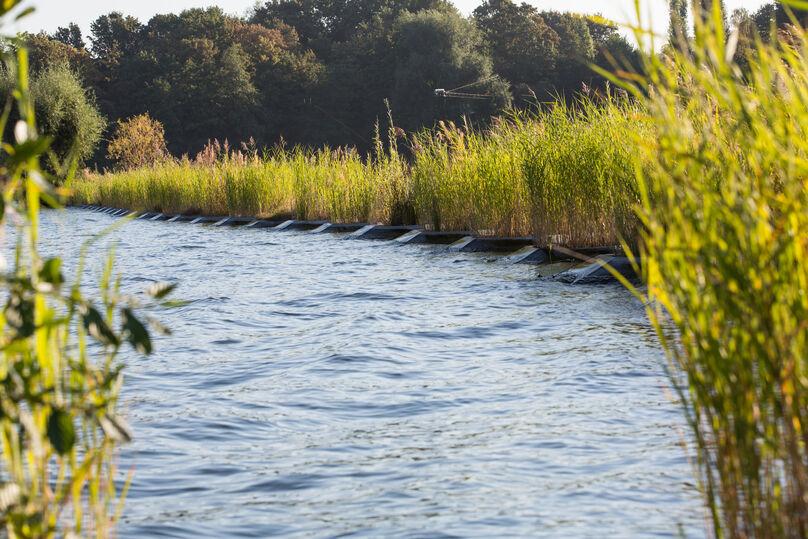 Eine ökologische Lösung gegen Wellenschlag und um Uferabbruch zu verhindern