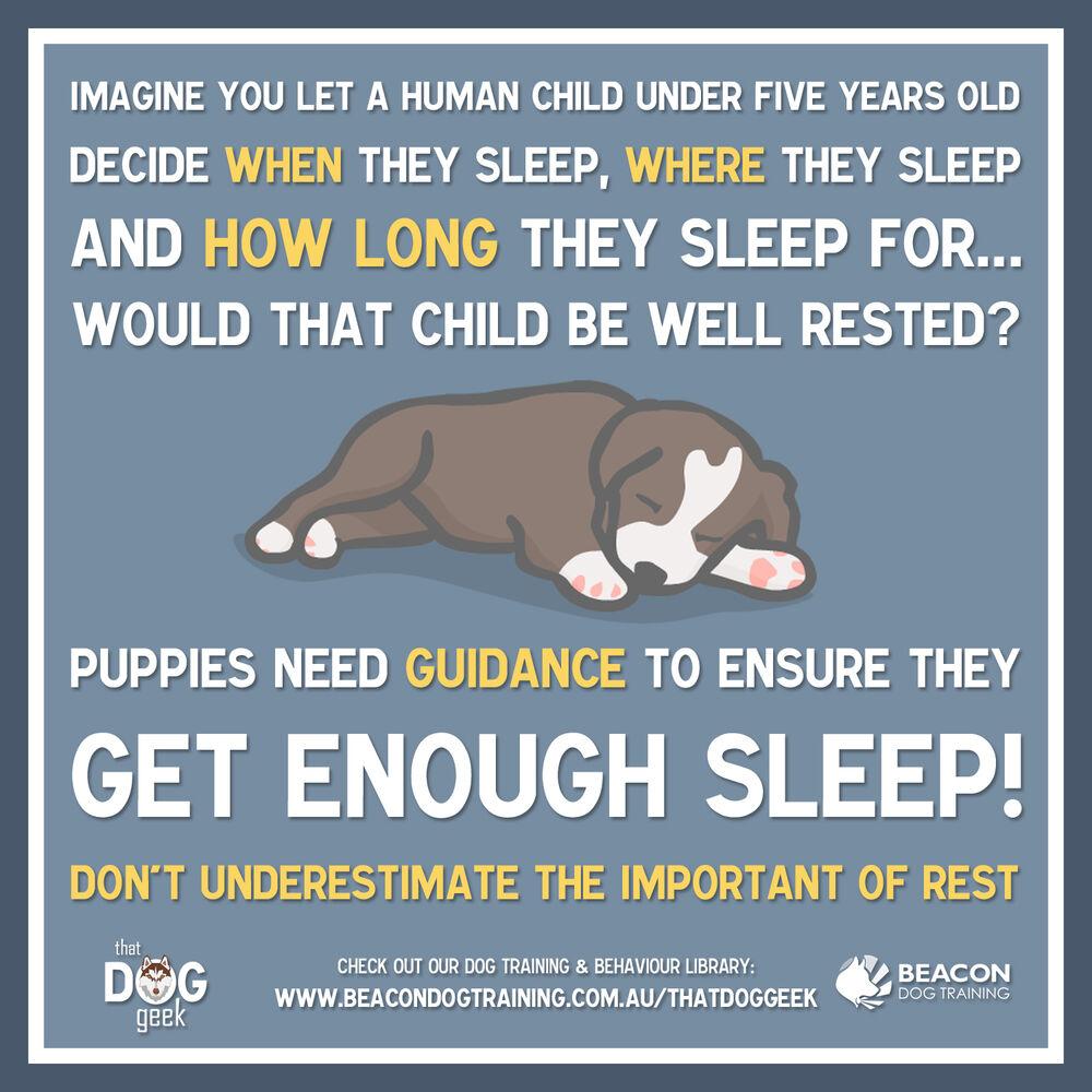 How Much Sleep Do Puppies Need Beacondogtrainingcomau