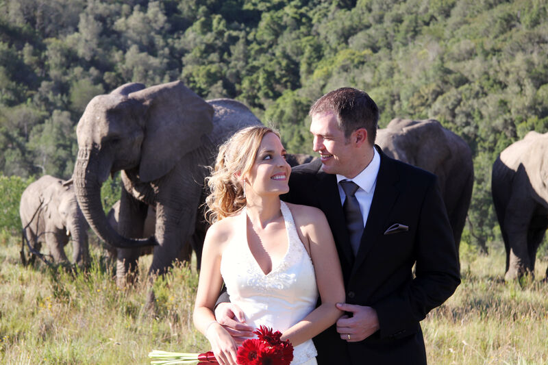 Bride and groom with elephants at Knysna Elephant Park
