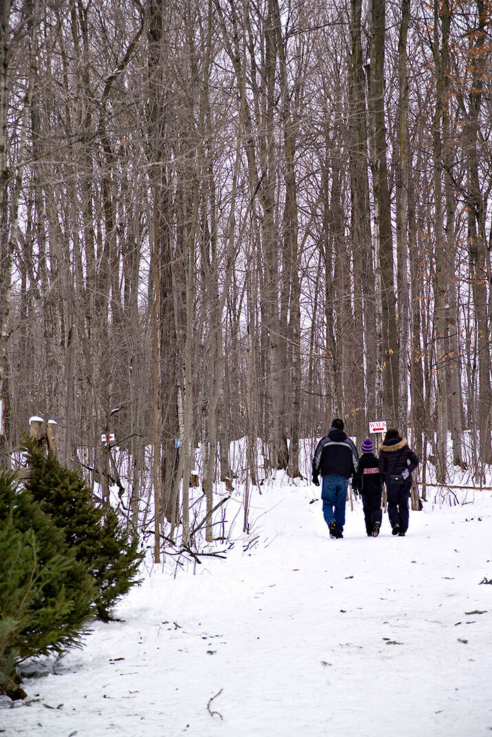 Walking trail at Thomas Tree Farm