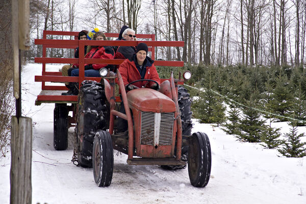 Ian Thomas driving the tractor at Thomas Tree Farm
