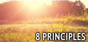8 Principles