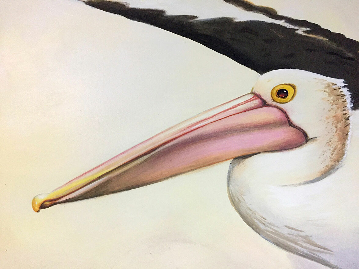 A close up of a pelican in Kippa-Ring mural at Ariala Restuarant, painted by Tom Cosic Art