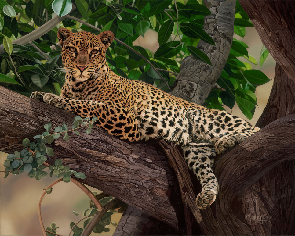 An original oil painting by artist Danny Day of a leopard relaxing in a tree.  It is also published and available as a limited edition giclee on canvas.