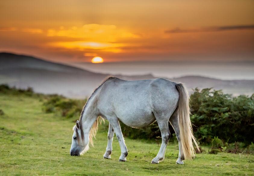 Horses on Cefyn Bryn, Wales
