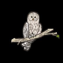 Sponsored ural owl at the Wild- & Adventure Park Ferleiten