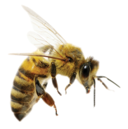 The Dopainium Bee is a metaphor that represents how the Artificial Intelligence gathers and shares data within the neural network