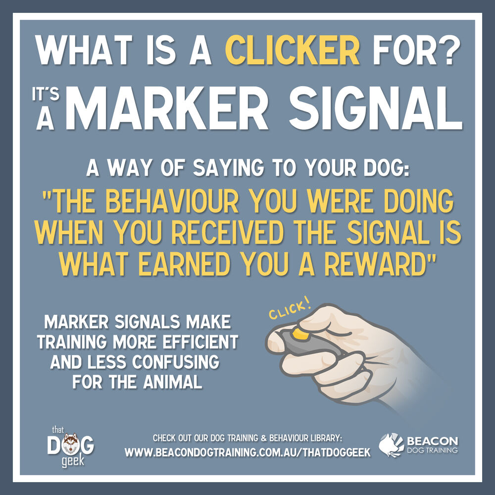 What Is A Clicker For?