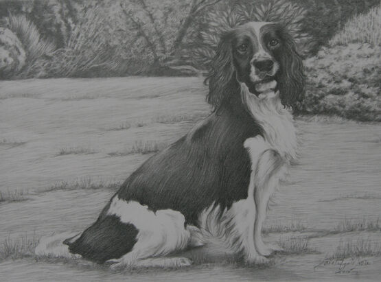 Black and white portrait  drawing of Springer Spaniel on grass with garden background