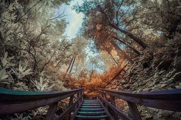 Sky Bridge Stairway
