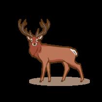 Rotwild Zeichenfläche 1