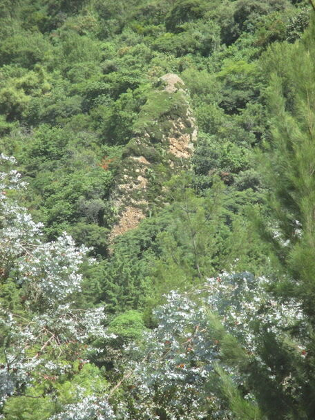 Narrow rock jutting two stories above forest and with some green vegetation on it.