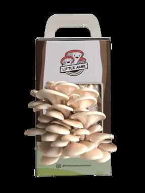 A White Oyster Mushroom Kit