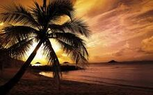 images Palm tree on beach