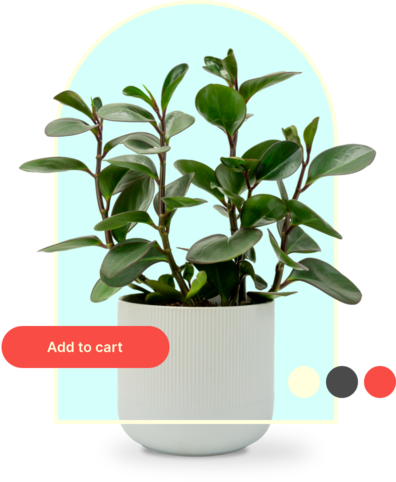 Collage of a plant, add to card button and some colors