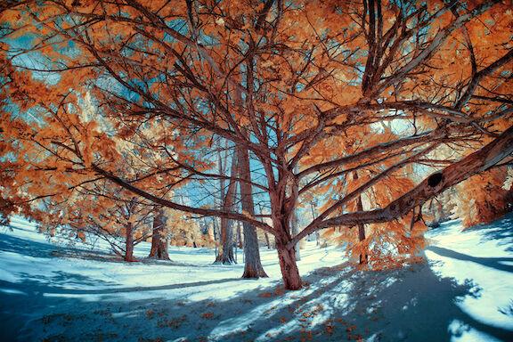 Winter in Spring grove 2
