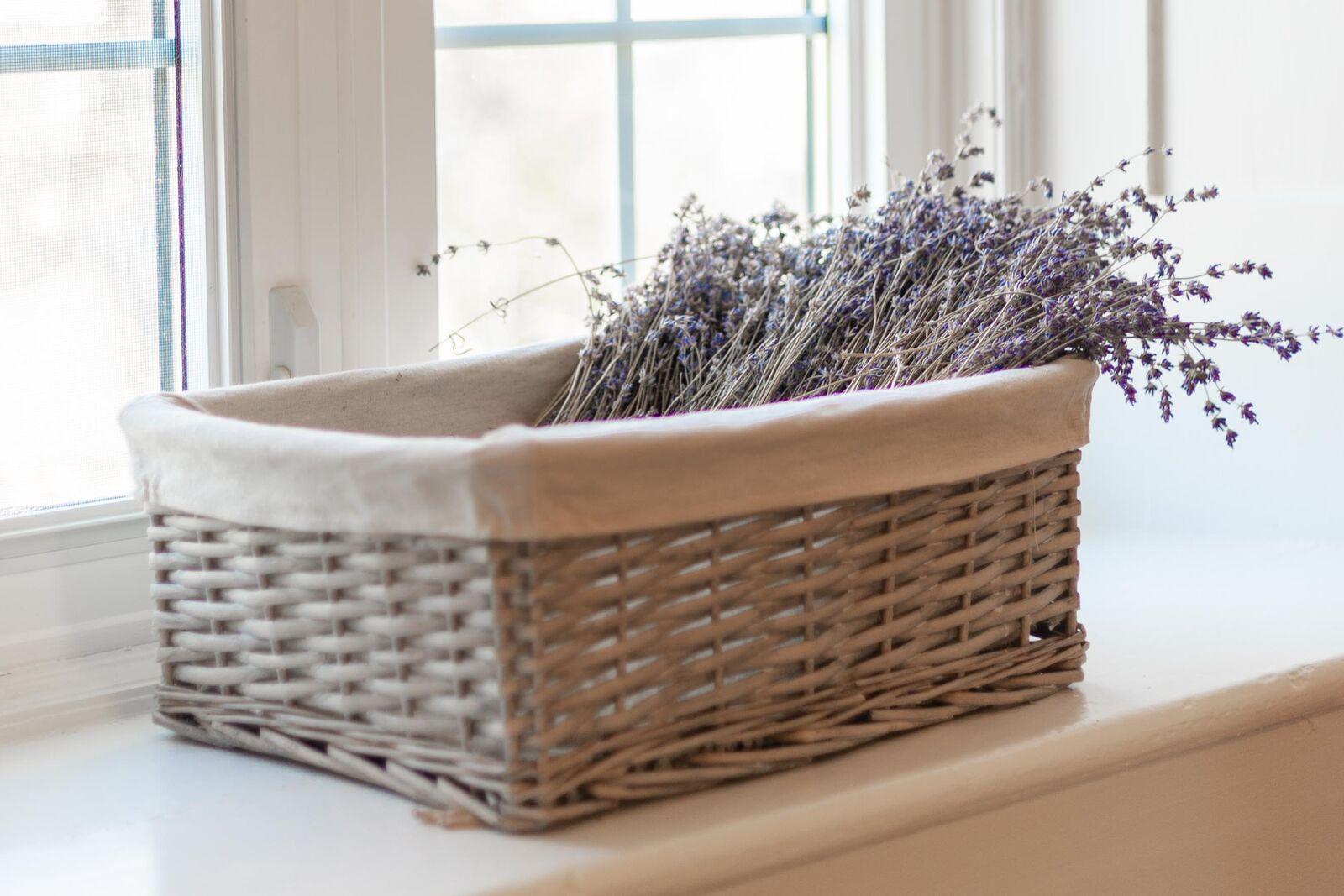 Window Lavender