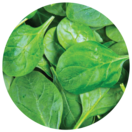 Spinach leaves, a source of alpha lipoic acid.