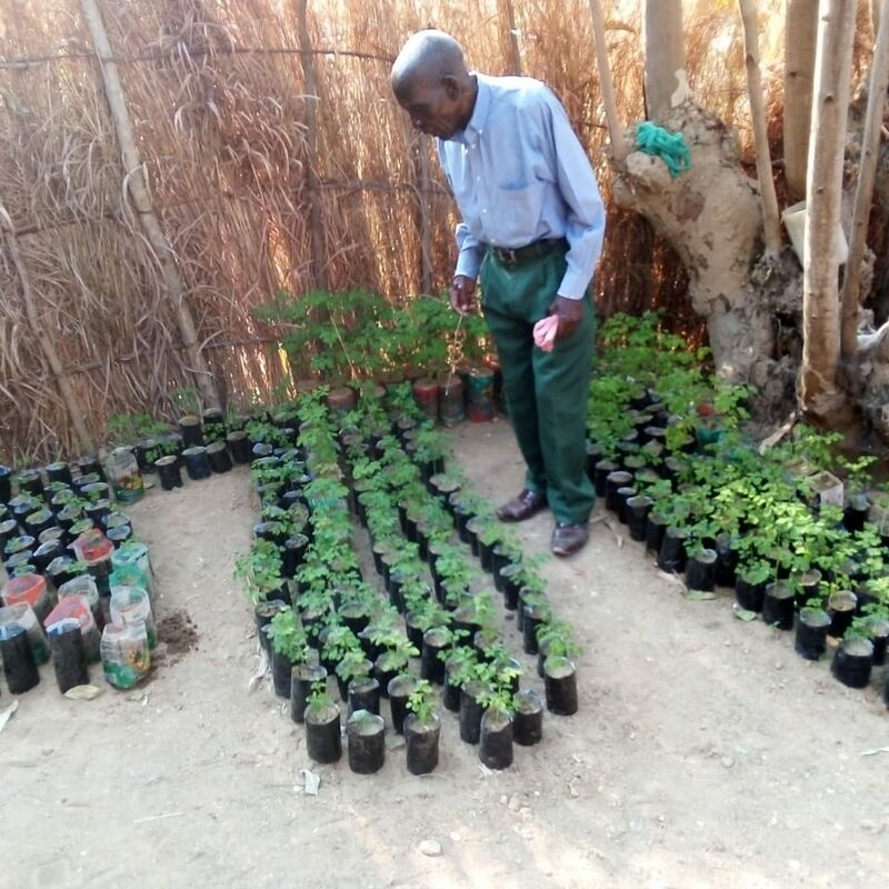 Checking the seedlings. This is an example of a successful nursery set up by Green Spark ambassadors in one of the villages.