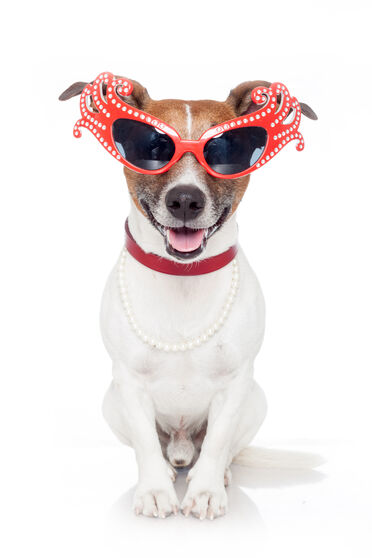 A dog wearing sunglasses and pearls.