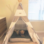 Happy Puppy L.A. loves Max-Bone products such as this tee-pee and dog bed