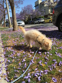 Happy Puppy L.A. loves Found My Animal leashes and collars